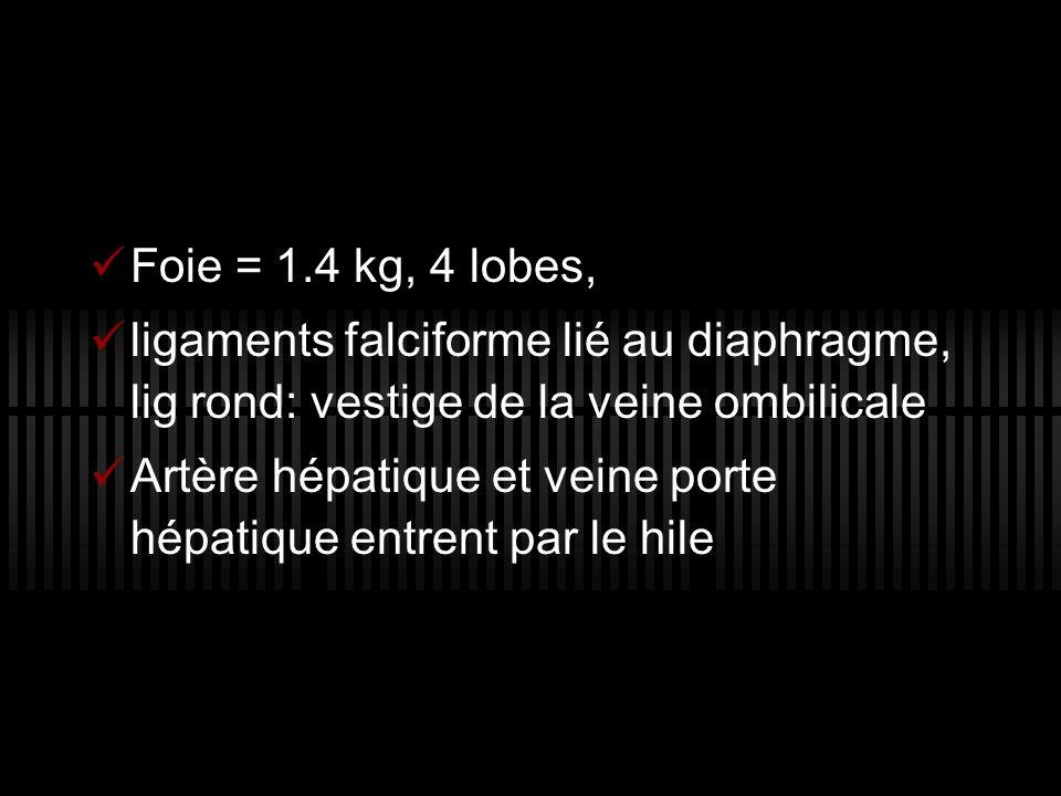 Foie = 1.4 kg, 4 lobes,ligaments falciforme lié au diaphragme, lig rond: vestige de la veine ombilicale.