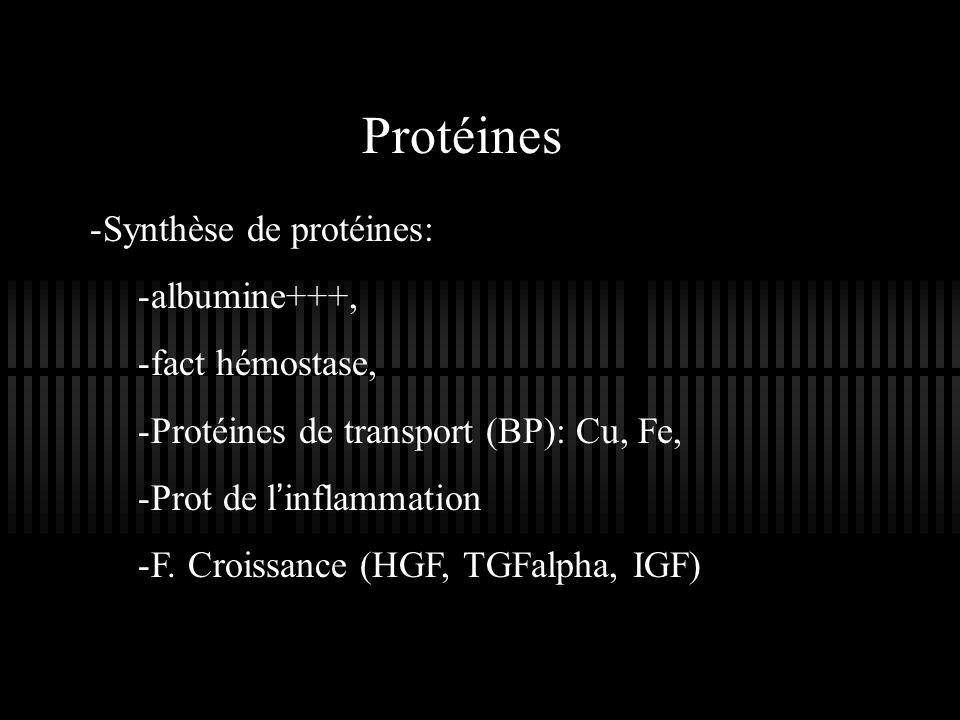 Protéines Synthèse de protéines: albumine+++, fact hémostase,