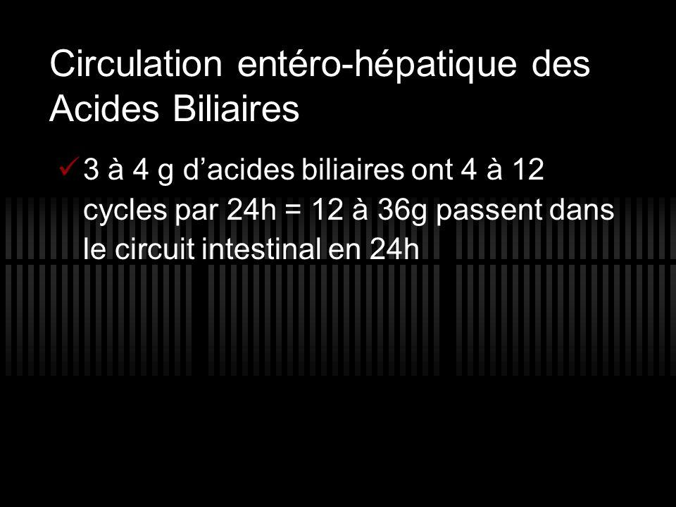 Circulation entéro-hépatique des Acides Biliaires