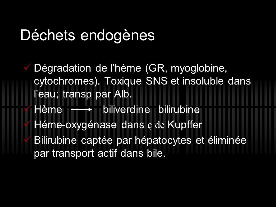 Déchets endogènes Dégradation de l'hème (GR, myoglobine, cytochromes). Toxique SNS et insoluble dans l'eau; transp par Alb.