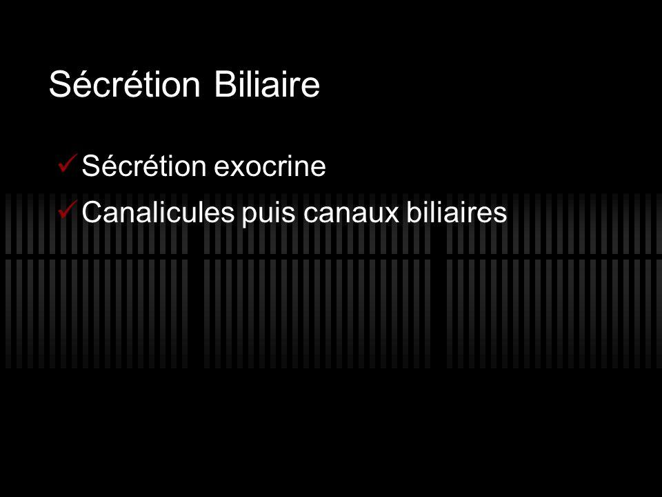 Sécrétion Biliaire Sécrétion exocrine