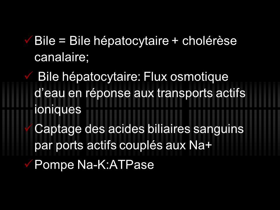 Bile = Bile hépatocytaire + cholérèse canalaire;