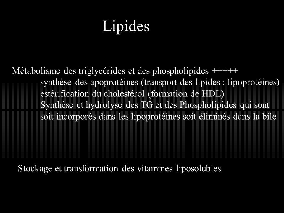 Lipides Métabolisme des triglycérides et des phospholipides +++++