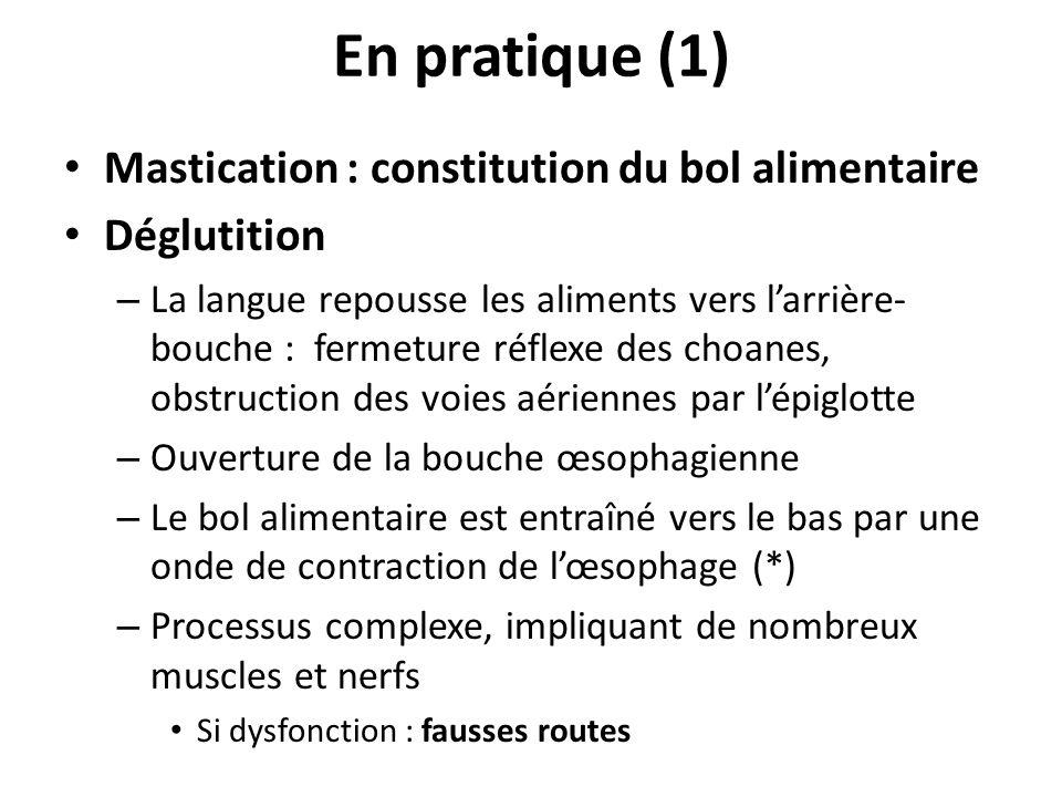 En pratique (1) Mastication : constitution du bol alimentaire