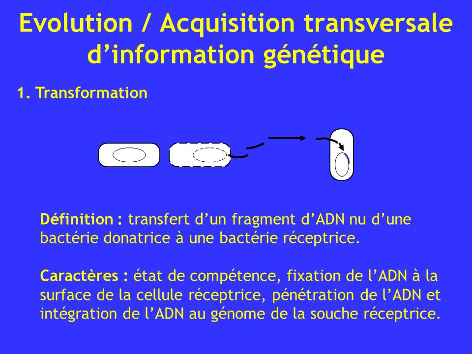 Evolution / Acquisition transversale d'information génétique
