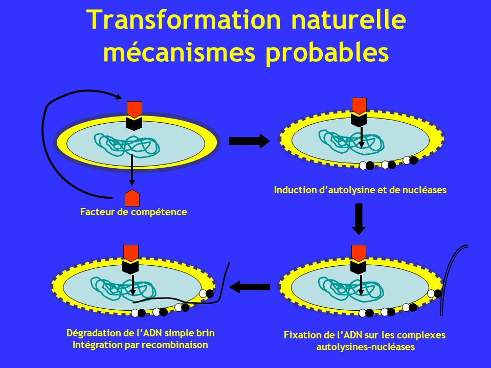 Transformation naturelle mécanismes probables