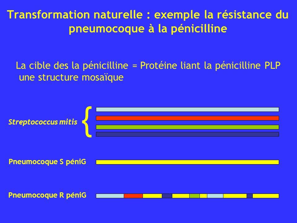 Transformation naturelle : exemple la résistance du pneumocoque à la pénicilline