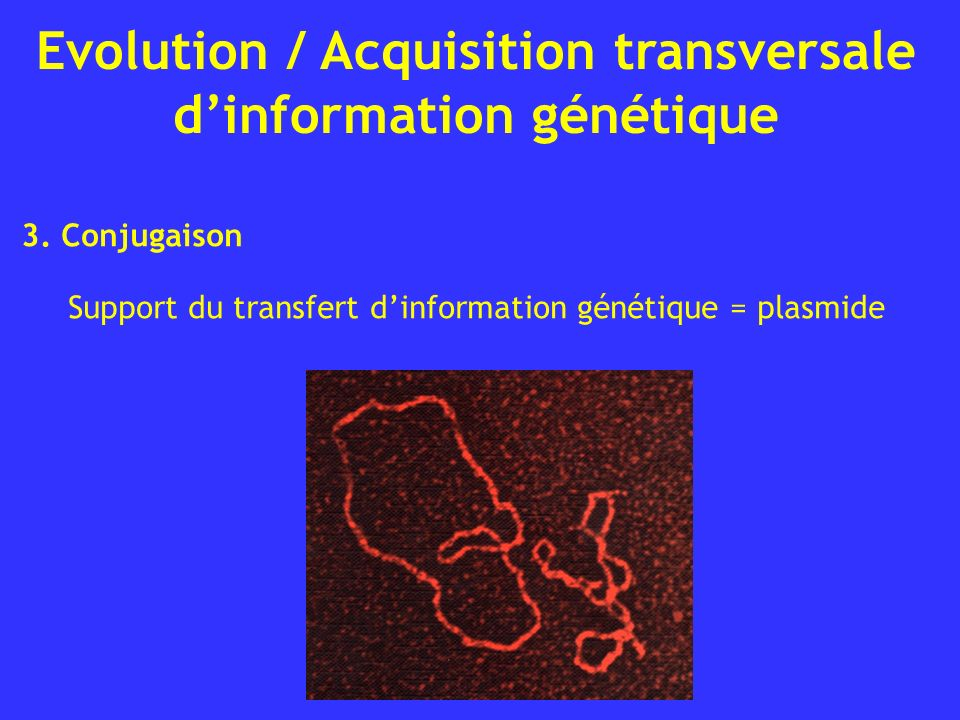 3. Conjugaison Support du transfert d'information génétique = plasmide