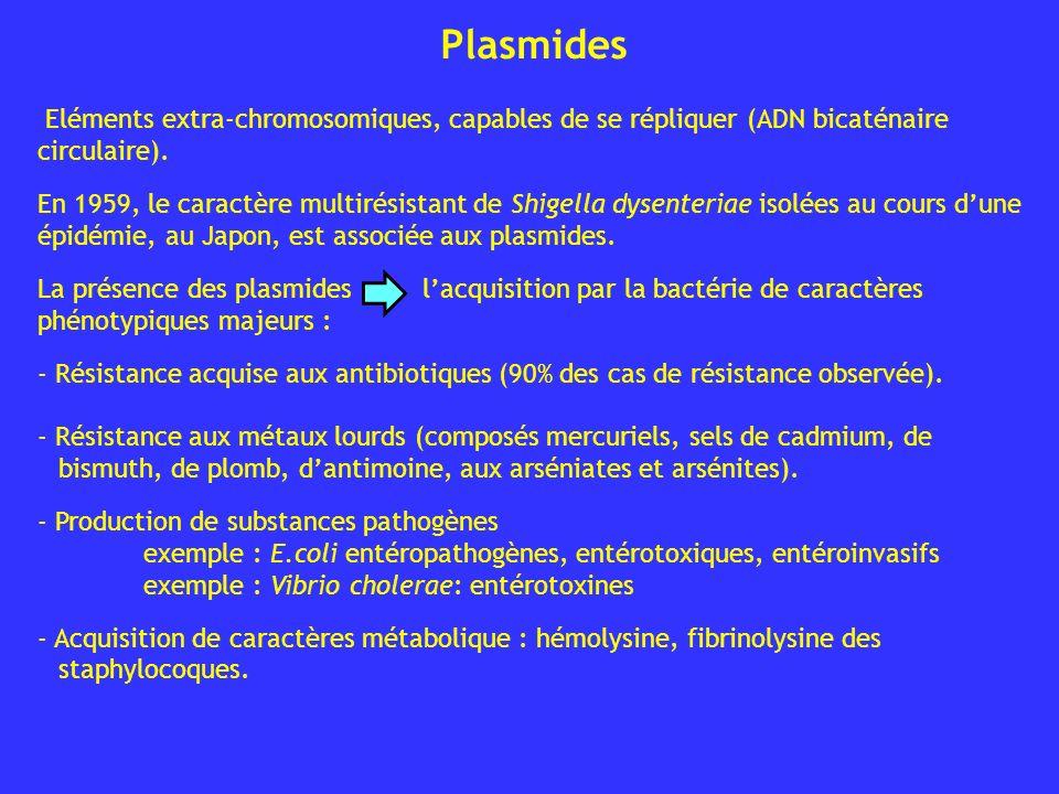 Plasmides Eléments extra-chromosomiques, capables de se répliquer (ADN bicaténaire circulaire).