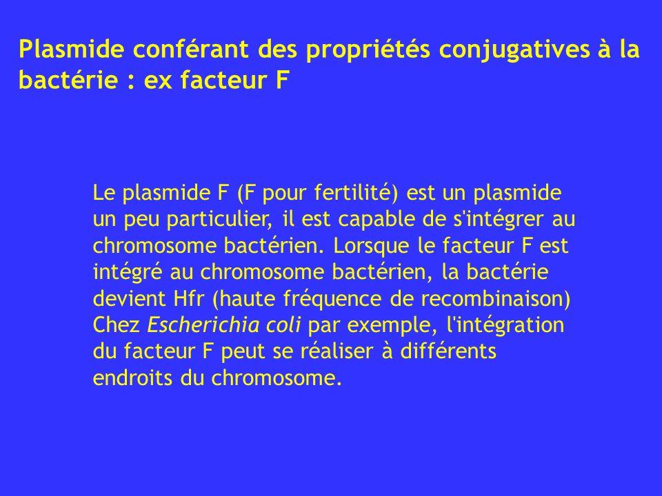 Plasmide conférant des propriétés conjugatives à la bactérie : ex facteur F
