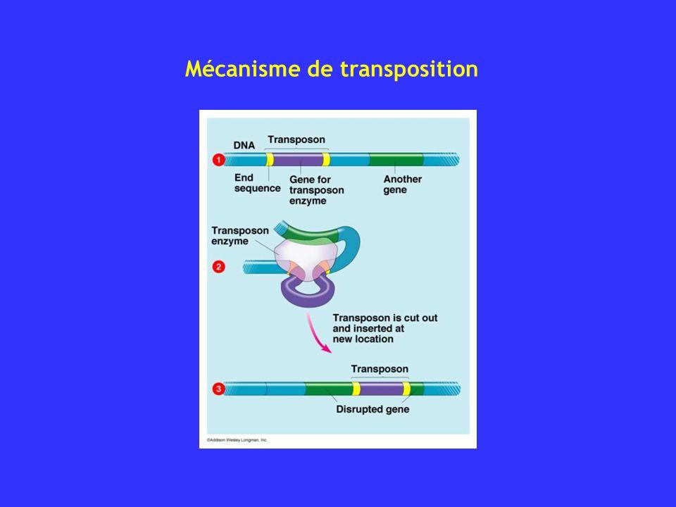 Mécanisme de transposition