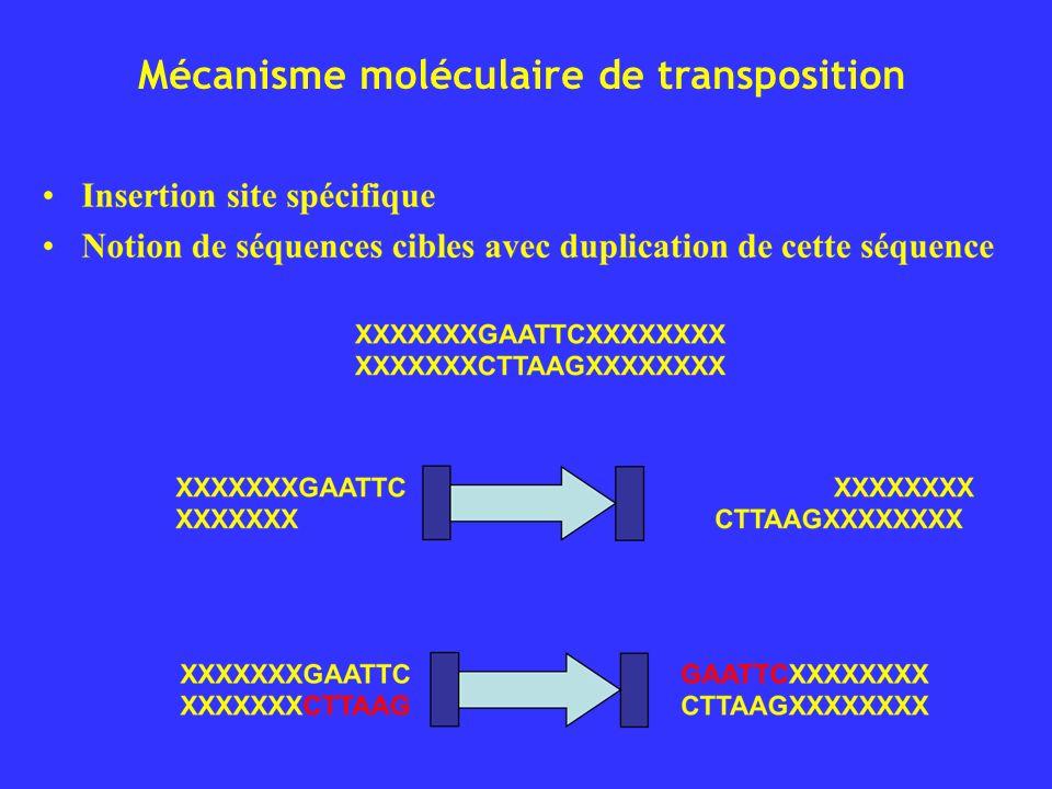 Mécanisme moléculaire de transposition