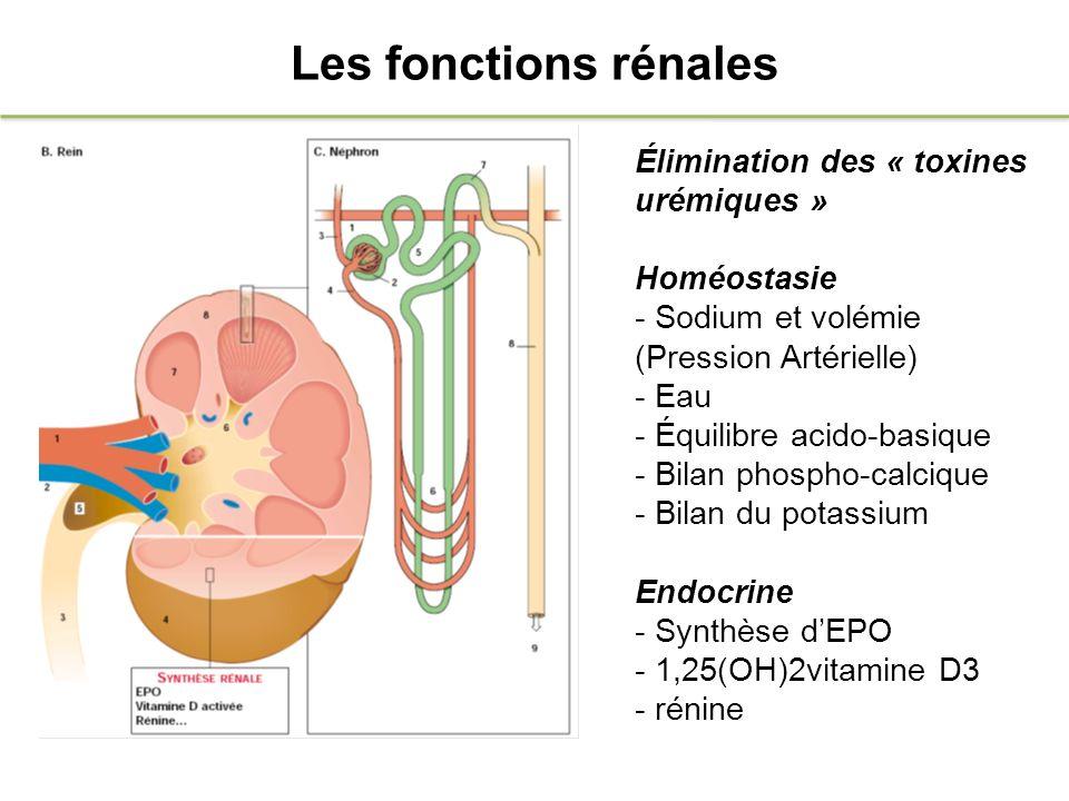 Les fonctions rénales Élimination des « toxines urémiques »