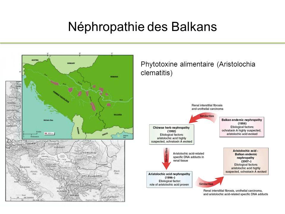 Néphropathie des Balkans