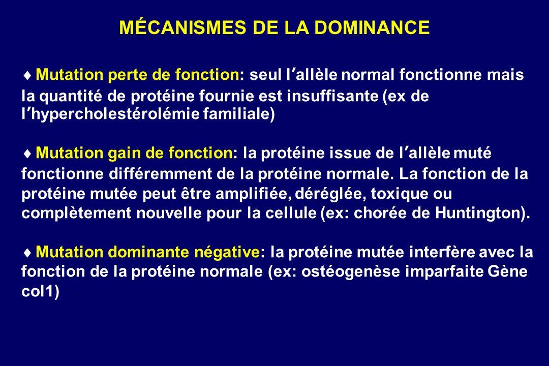 MÉCANISMES DE LA DOMINANCE