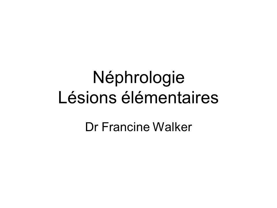 Néphrologie Lésions élémentaires