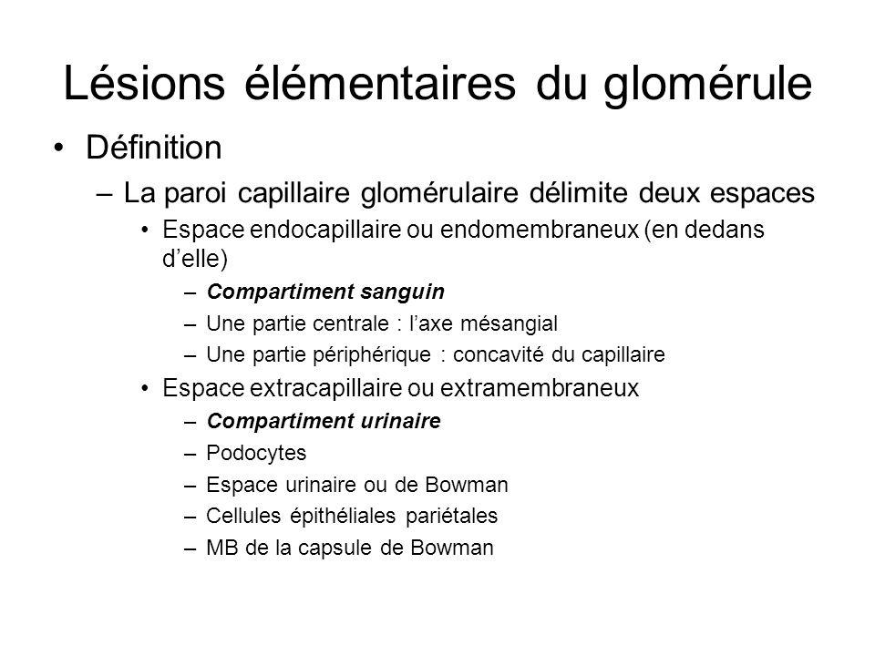Lésions élémentaires du glomérule
