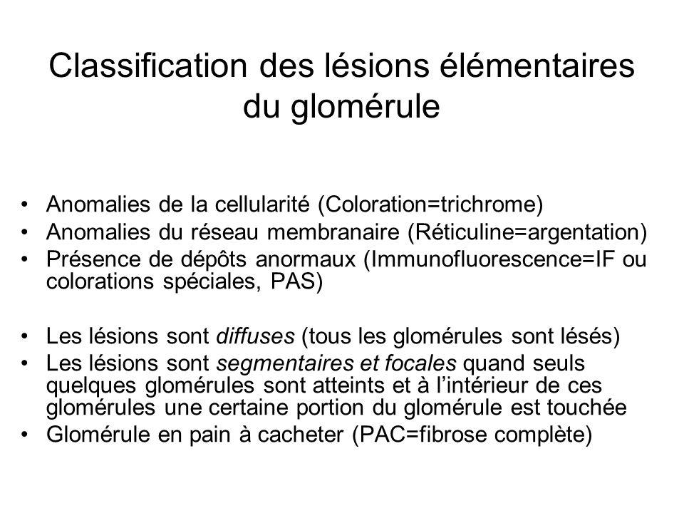 Classification des lésions élémentaires du glomérule