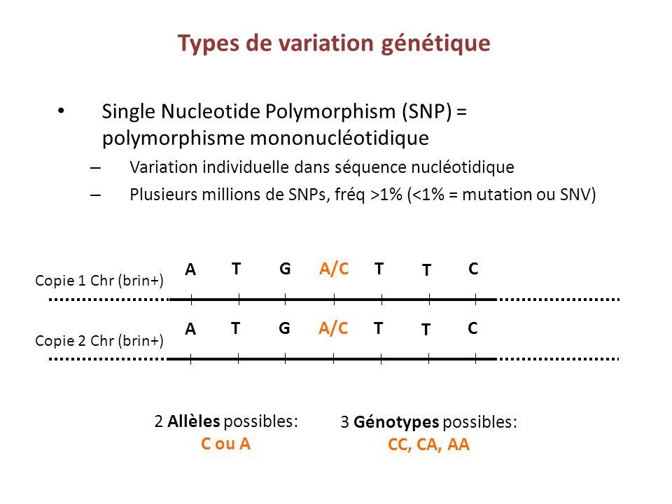 Types de variation génétique