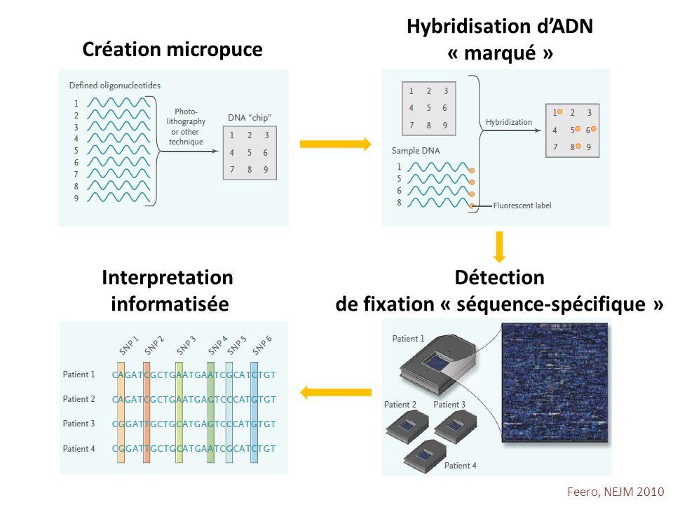 Hybridisation d'ADN « marqué » de fixation « séquence-spécifique »