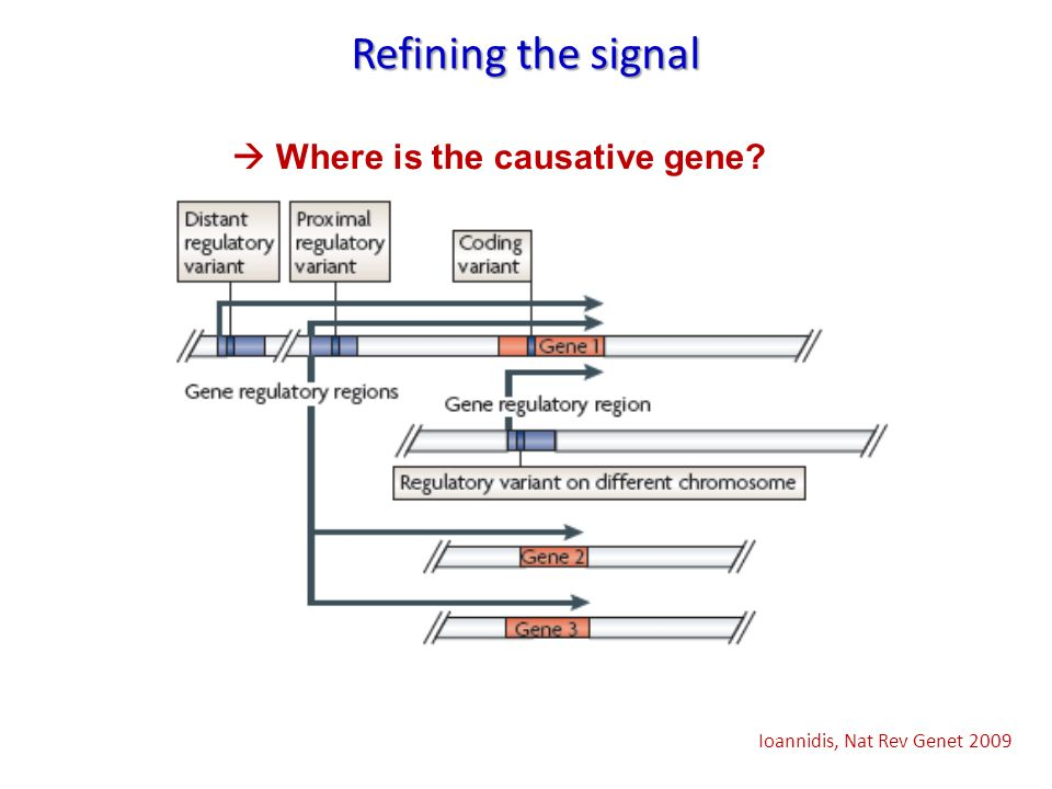 Refining the signal  Where is the causative gene