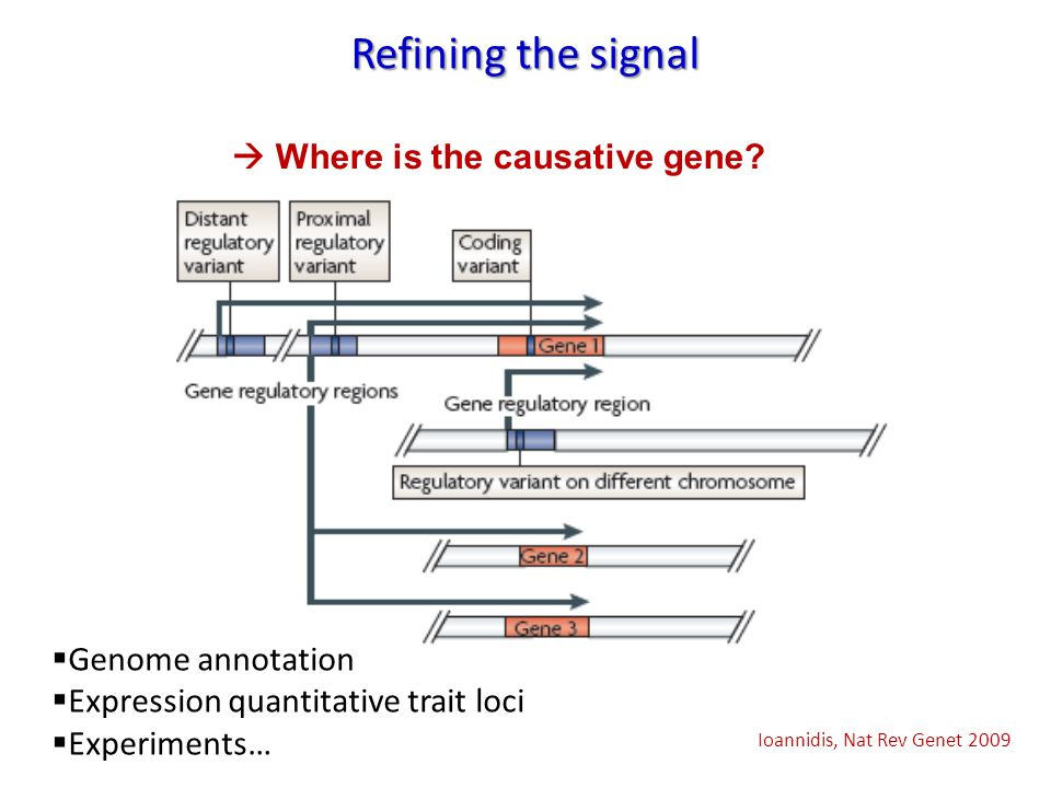 Refining the signal  Where is the causative gene Genome annotation