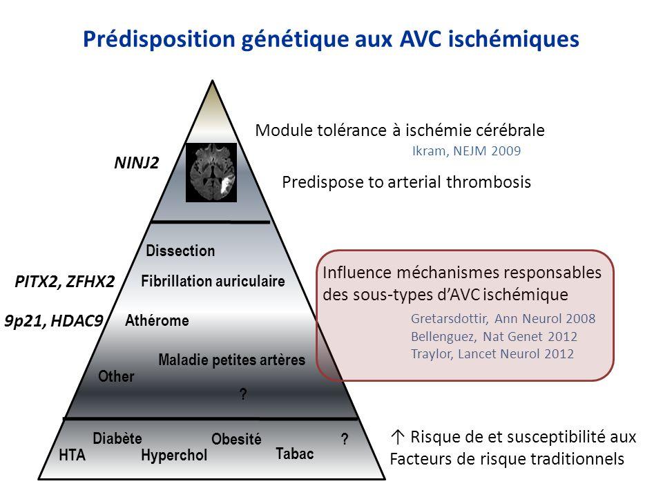 Prédisposition génétique aux AVC ischémiques