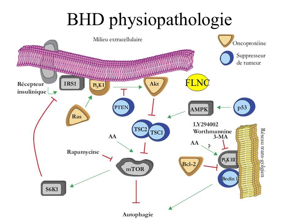 BHD physiopathologie FLN FLNC