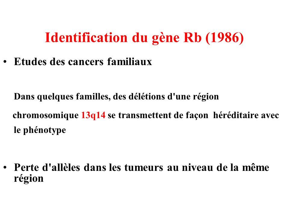 Identification du gène Rb (1986)