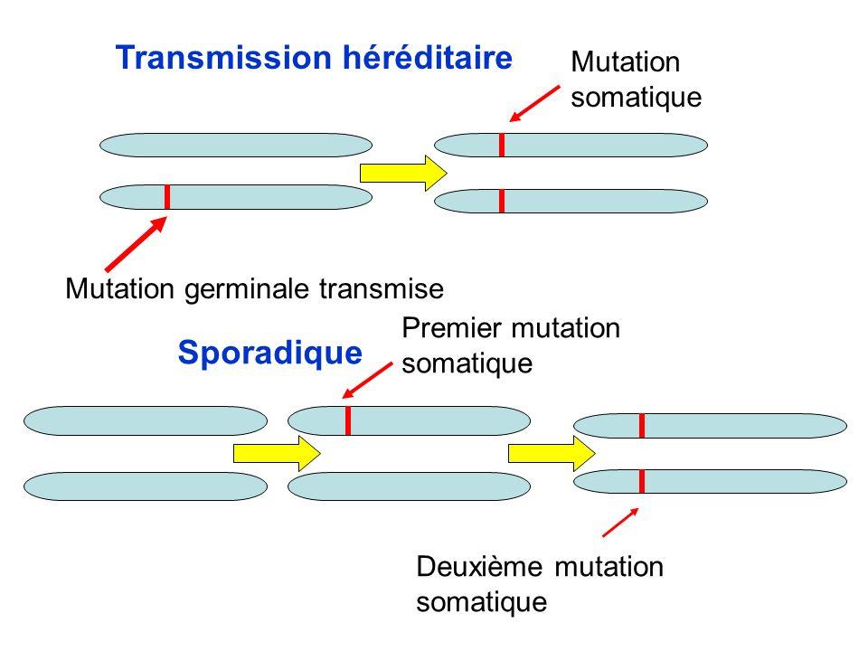 Transmission héréditaire