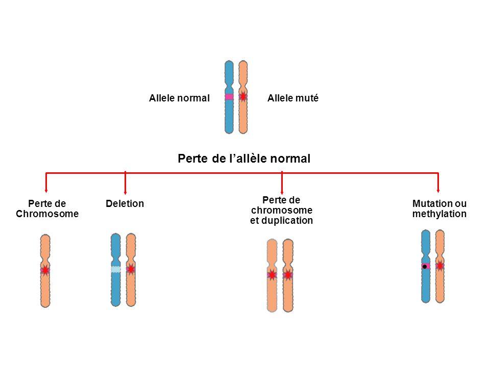 Perte de chromosome et duplication Mutation ou methylation