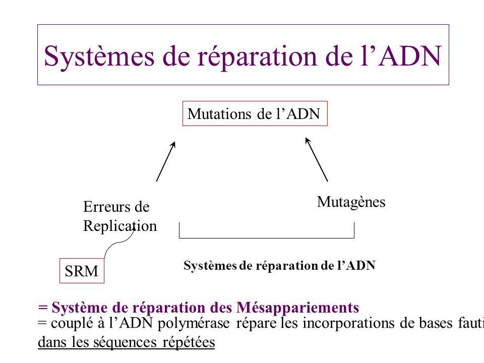 Systèmes de réparation de l'ADN