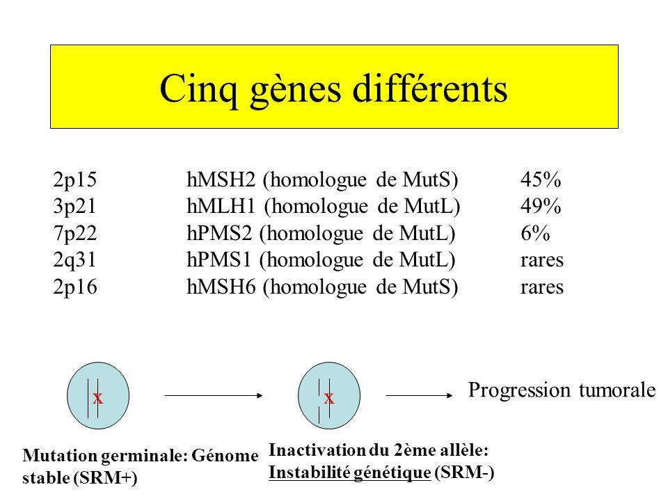 Cinq gènes différents 2p15 hMSH2 (homologue de MutS) 45%