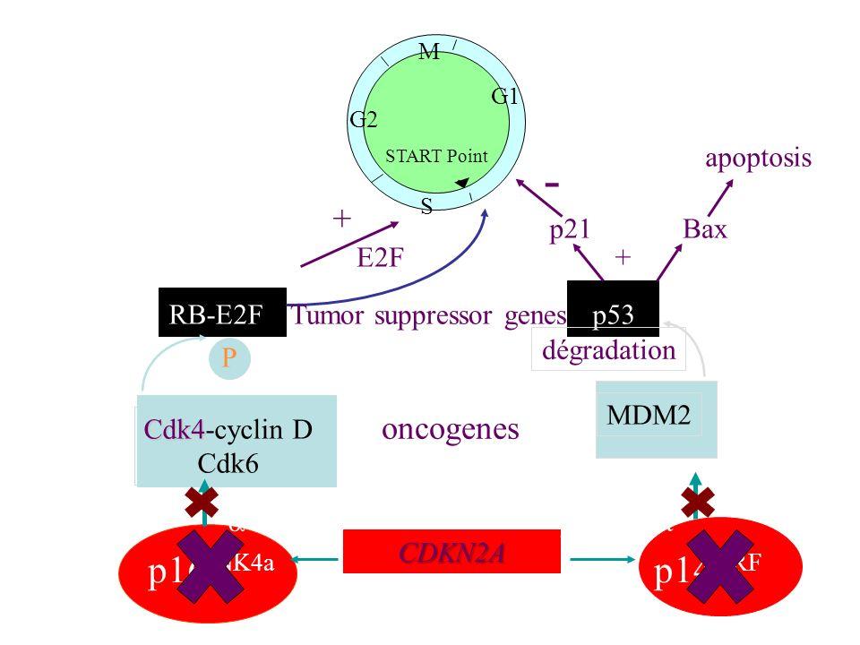 Tumor suppressor genes