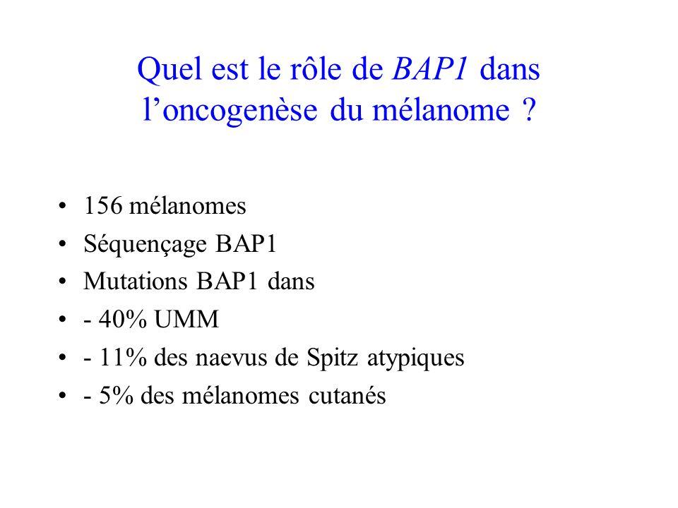 Quel est le rôle de BAP1 dans l'oncogenèse du mélanome
