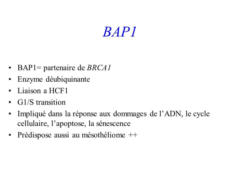 BAP1 BAP1= partenaire de BRCA1 Enzyme déubiquinante Liaison a HCF1