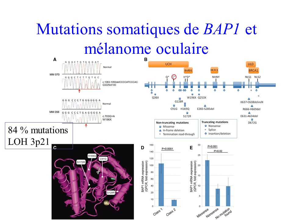 Mutations somatiques de BAP1 et mélanome oculaire