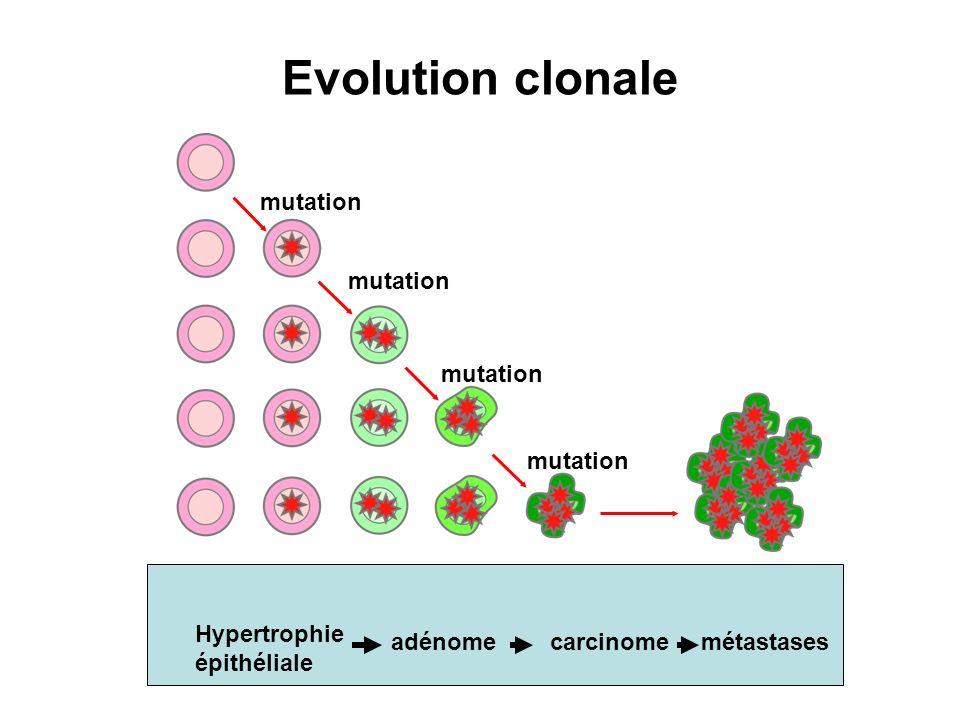 Evolution clonale mutation mutation mutation mutation Hypertrophie