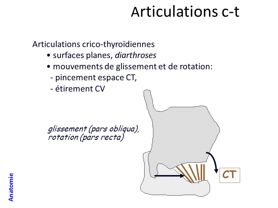 Articulations c-t CT Articulations crico-thyroïdiennes