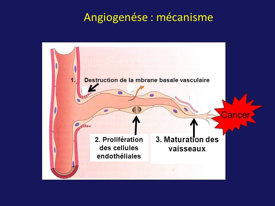 Angiogenése : mécanisme