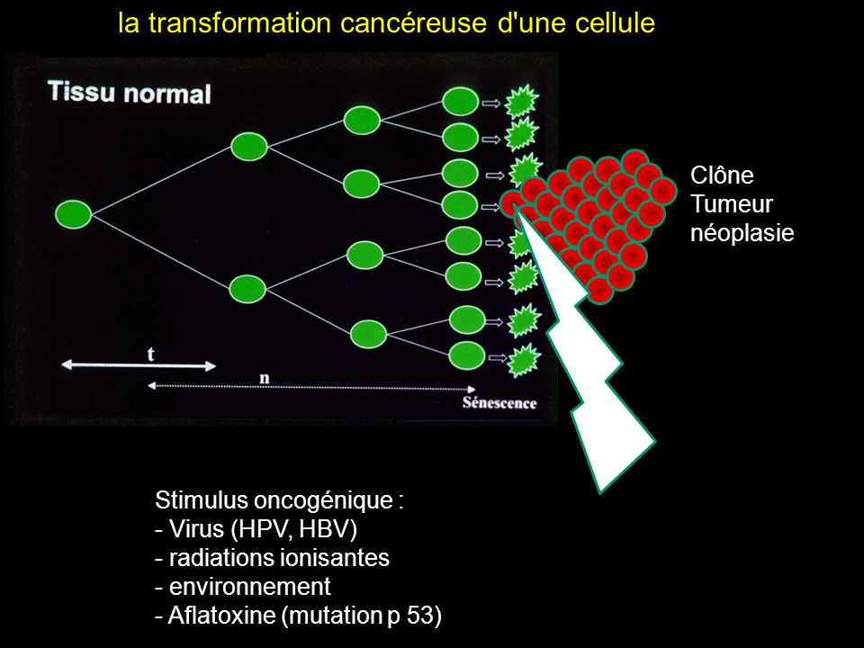 la transformation cancéreuse d une cellule
