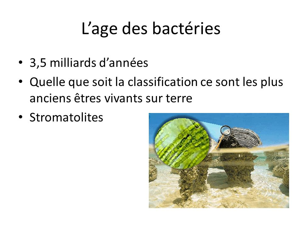 L'age des bactéries 3,5 milliards d'années