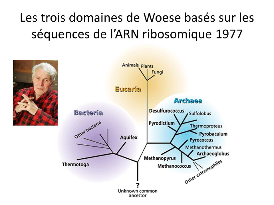 Les trois domaines de Woese basés sur les séquences de l'ARN ribosomique 1977