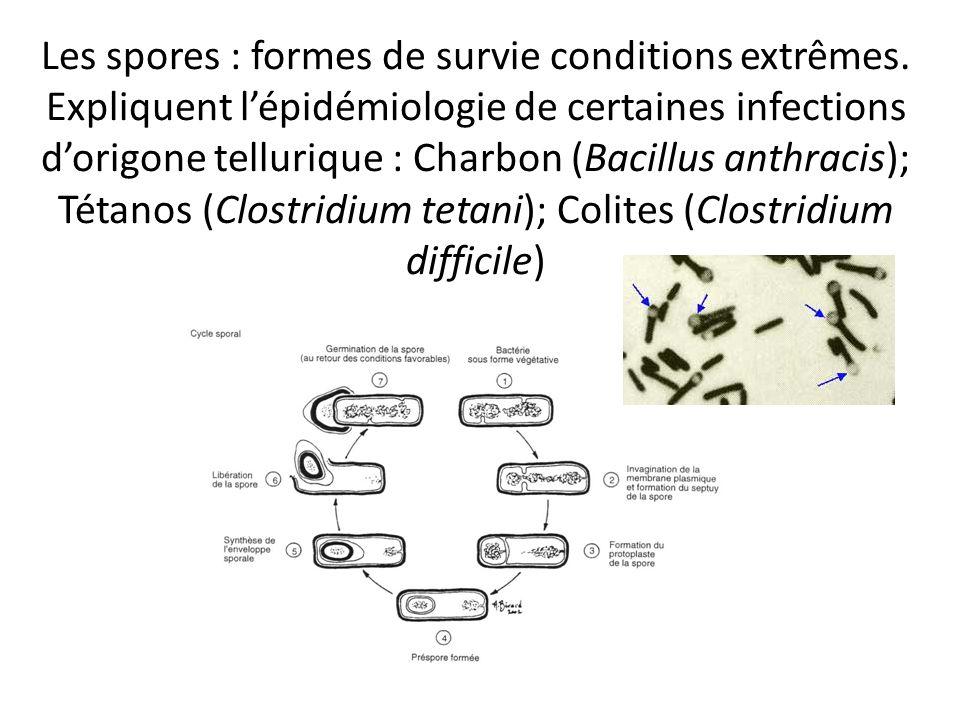 Les spores : formes de survie conditions extrêmes