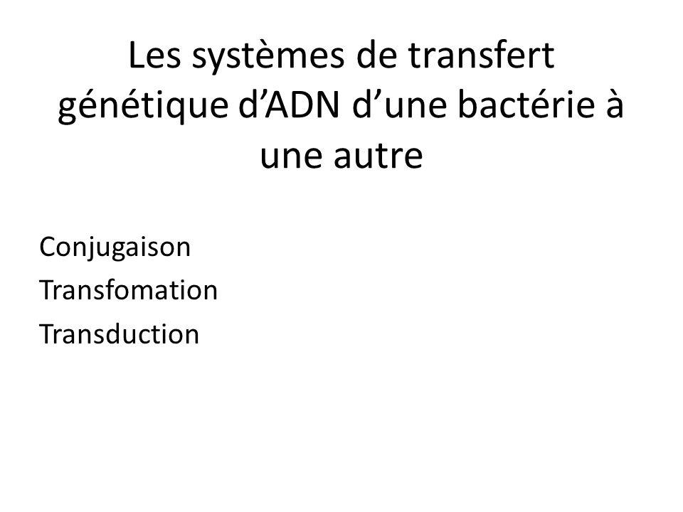 Les systèmes de transfert génétique d'ADN d'une bactérie à une autre