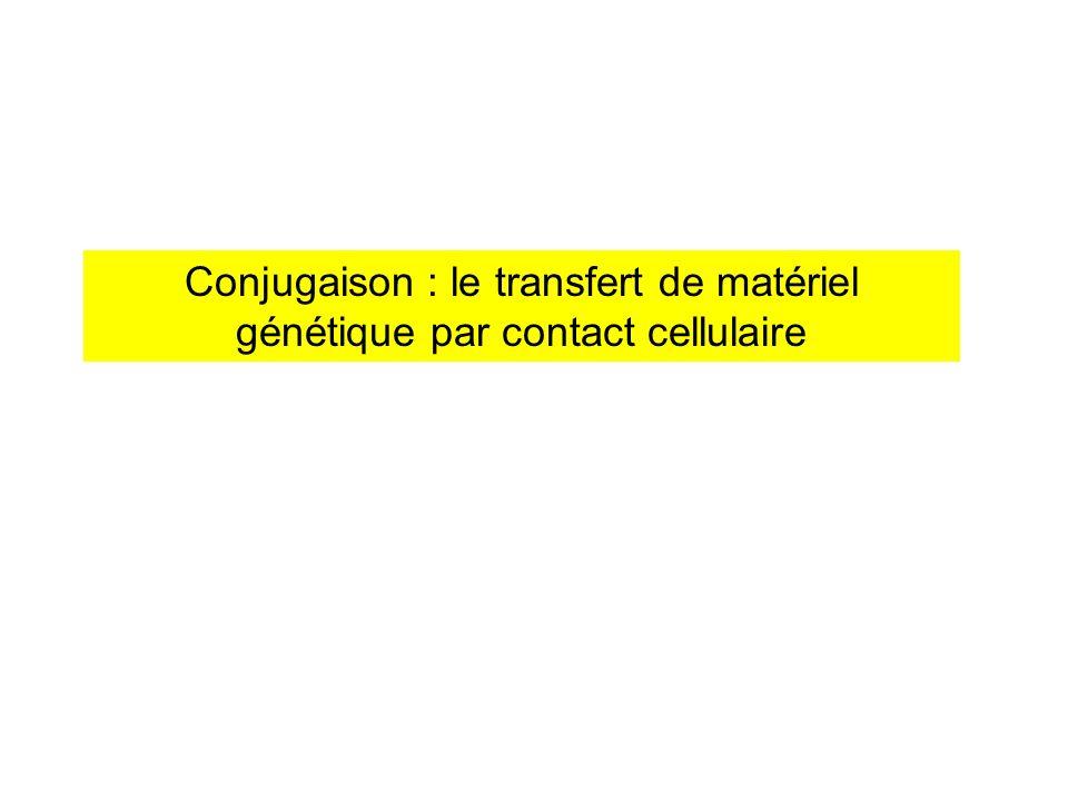 Conjugaison : le transfert de matériel génétique par contact cellulaire