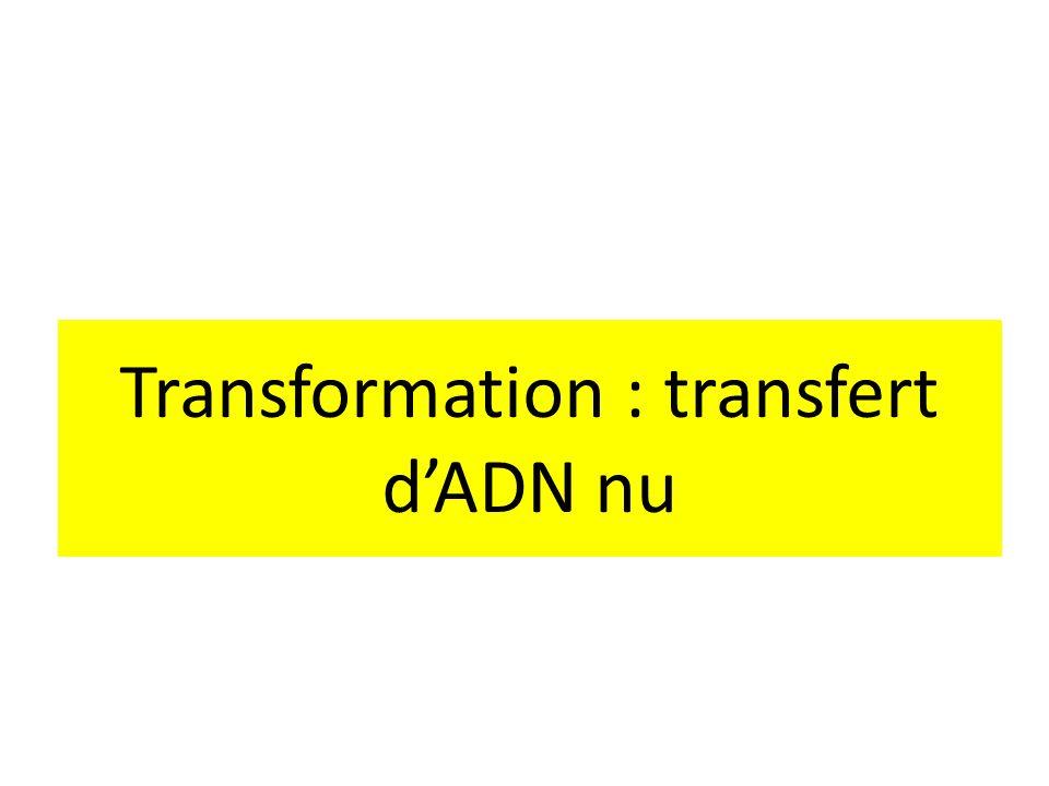 Transformation : transfert d'ADN nu