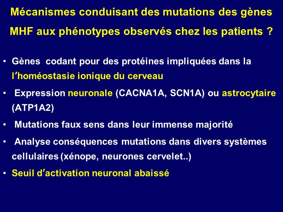 Mécanismes conduisant des mutations des gènes MHF aux phénotypes observés chez les patients