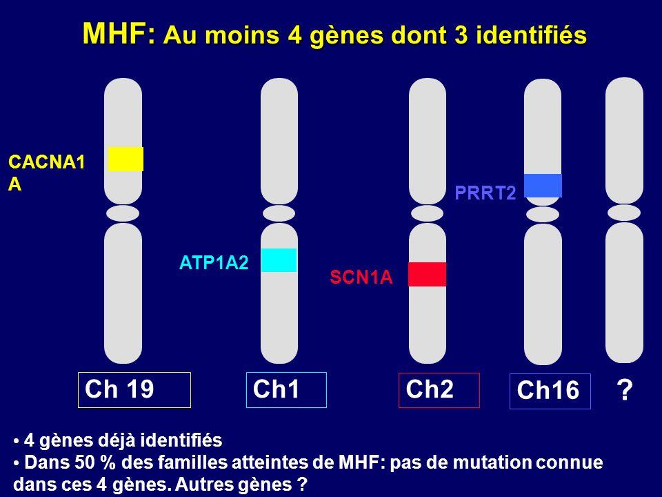 MHF: Au moins 4 gènes dont 3 identifiés