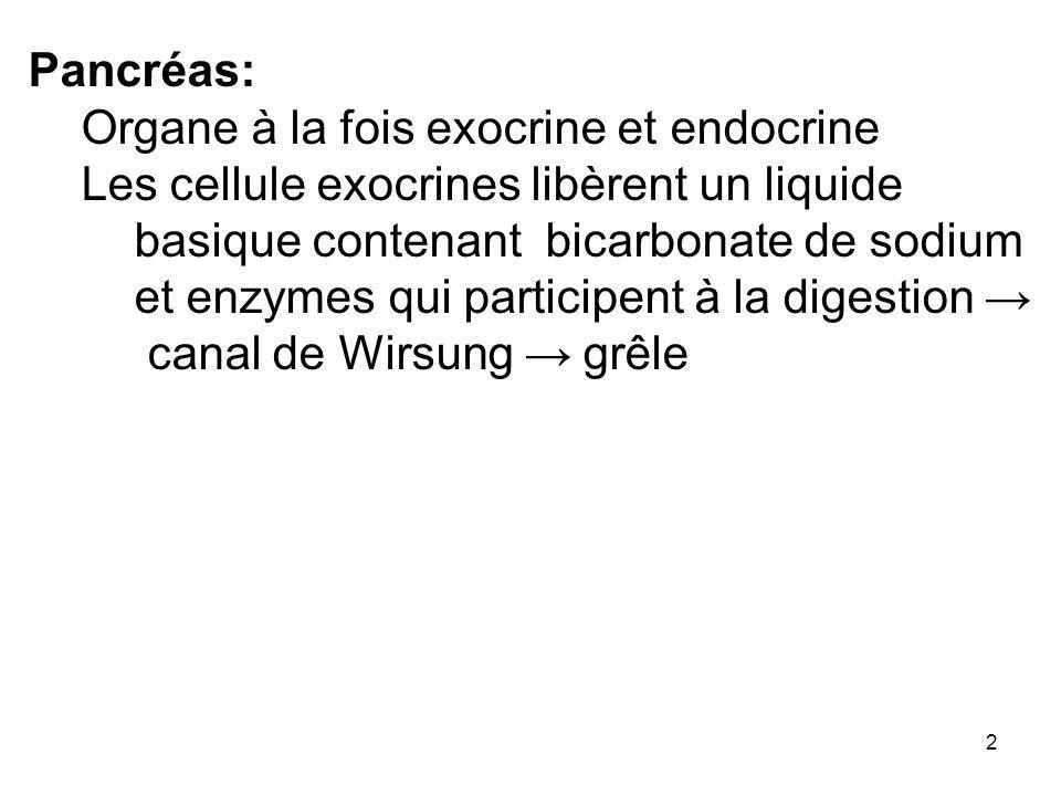 Pancréas:Organe à la fois exocrine et endocrine.